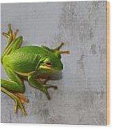 Beautiful American Green Tree Frog On Grunge Background  Wood Print