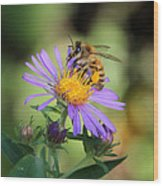 Beautiful Bee Wood Print