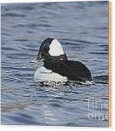 Beautiful Bufflehead Duck At The Lake Wood Print