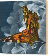 Beautiful Butterfly Wood Print