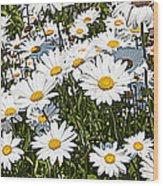 Beautiful Daisies Wood Print
