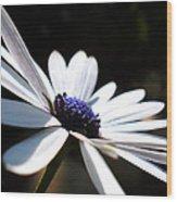 Beautiful Daisy Wood Print