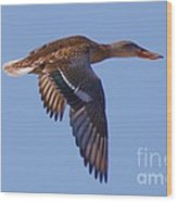 Beautiful Duck Flying Wood Print