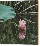 Beautiful Fallen Lotus Wood Print
