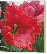 Beautiful From Inside And Out - Parrot Tulips In Philadelphia Wood Print