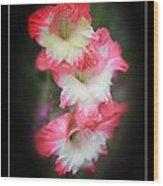 Beautiful Gladiolus Wood Print