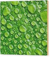 Beautiful Green Leaf With  Water Drops Wood Print