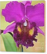 Beautiful Hot Pink Orchid Wood Print