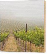 Beautiful Lush Grape Vineyard Wood Print