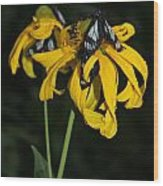 Beautiful Moths Ser1 Wood Print