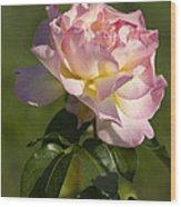 Beautiful Pink And Yellow Climbing Peace Rose Wood Print