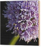 Beautiful Purple Flower Allium Senescens Wood Print