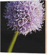 Beautiful Purple Flower With Black Background Wood Print