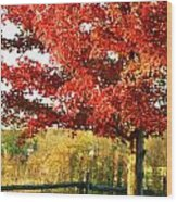Beautiful Red Maple Tree  Wood Print