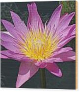 Beautiful Water Lily Wood Print
