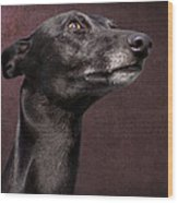 Beautiful Whippet Dog Wood Print by Ethiriel  Photography