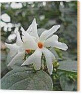 Beautiful White Flower With Orange Center Wood Print