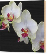 Beautiful White Orchids Wood Print