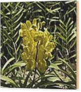 Beautiful Yellow Flowers Inside The National Orchid Garden In Singapore Wood Print