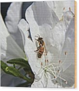 Beauty And The Bee Wood Print