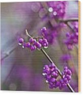 Beauty Berry Explosion Wood Print