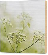 Beauty In Nature Wood Print