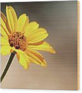 Beauty In Simplicity Wood Print