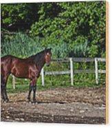 Beauty Of A Horse Wood Print