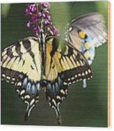 Beauty Of Butterflies  Wood Print
