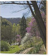 Beauty Of Spring Wood Print