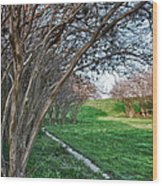 Beauty Without Blossoms Wood Print