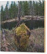 Beaver Marks Wood Print