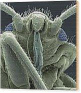 Bedbug Head, Sem Wood Print