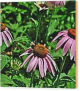 Bee And Flower Wood Print