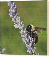 Bee And Lavender Wood Print