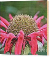 Bee Balm Button Wood Print