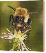 Bee Drinking Wood Print