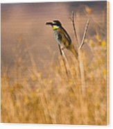 Bee Eater With Insect Wood Print