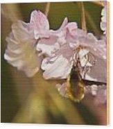 Bee Fly Feeding 1 Wood Print