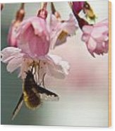 Bee Fly Feeding 2 Wood Print
