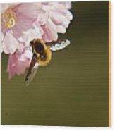Bee Fly Feeding 4 Wood Print