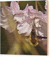 Bee Fly Sucking Nectar 1 Wood Print