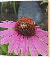 Bee Gathering Pollen On Cone Flower Wood Print