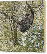 Bee Hive In A Tree Wood Print
