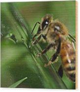 Bee In Green Wood Print