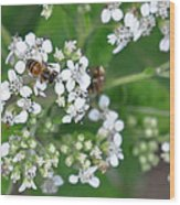 Bee Of The White Flower Wood Print
