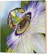 Bee On A Nigella Wood Print
