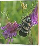 Bee On A Pink Flower Wood Print