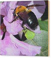 Bee On Azalea Bloom Wood Print by Lisa Phillips