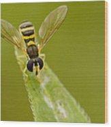 Bee On Belief  Wood Print by Dean Bennett